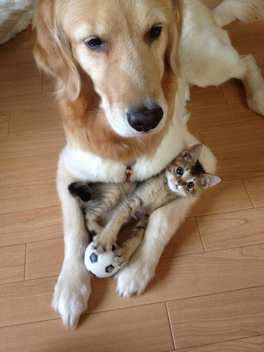 cats-and-dogs-getting-along-55__605