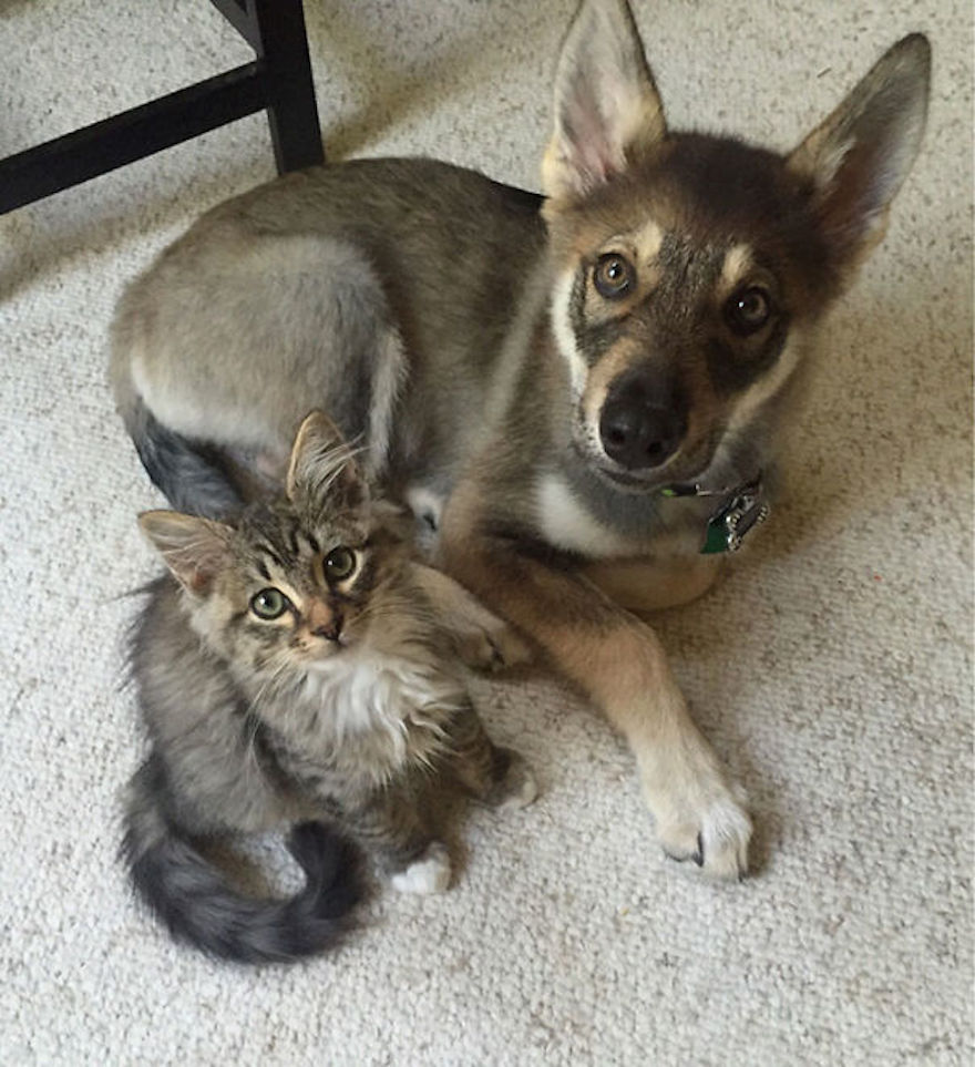 cats-and-dogs-getting-along-4__605