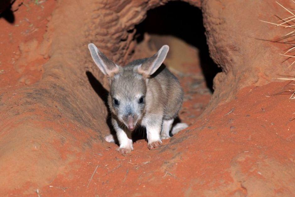 http://www.abc.net.au/news/image/1132138-3x2-940x627.jpg