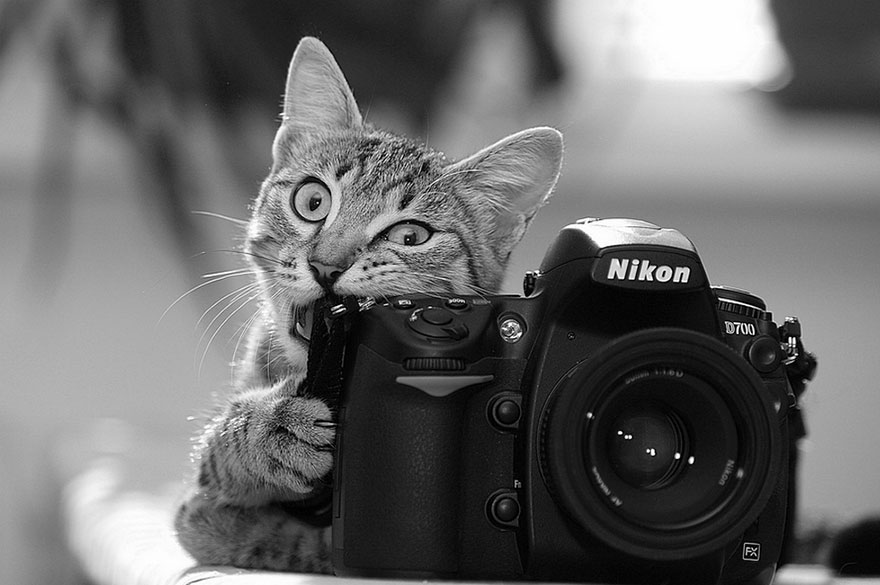 animals-with-camera-helping-photographers-8__880
