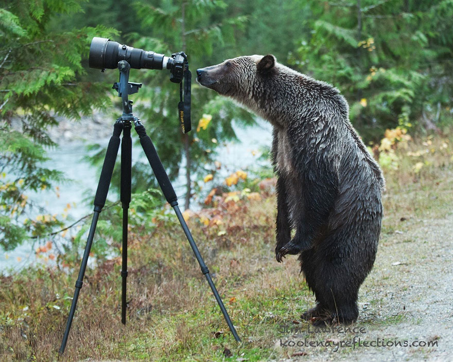 animals-with-camera-helping-photographers-9__880