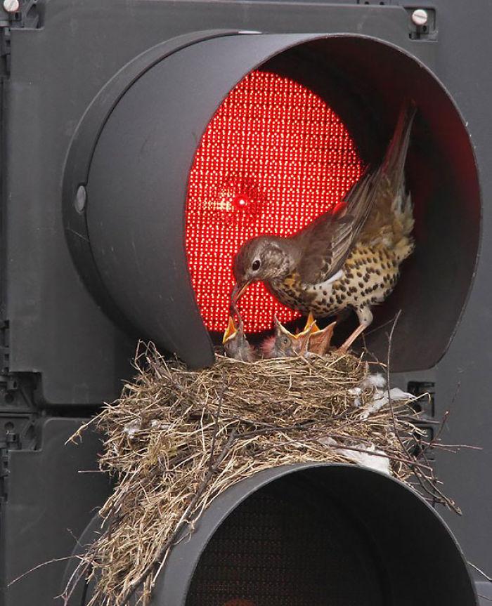 Traffic Light Nest
