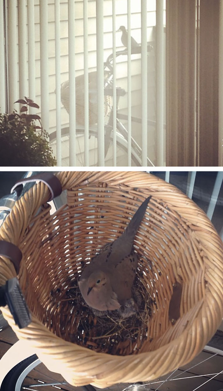 Dove Nest Inside Basket