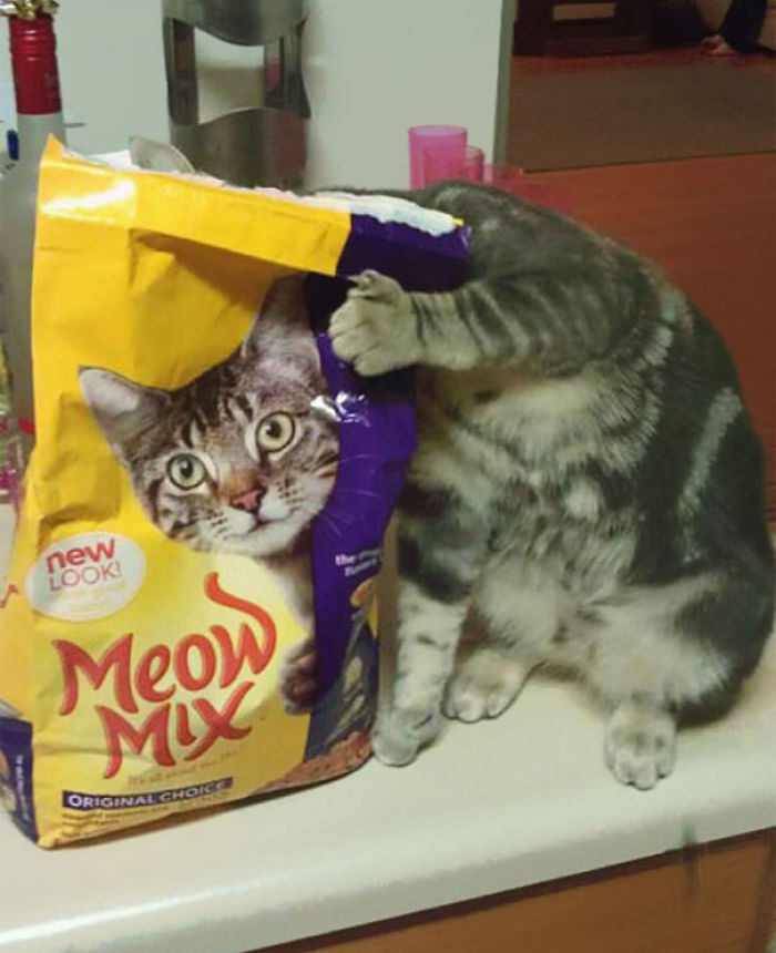 Perfectly Timed Cat