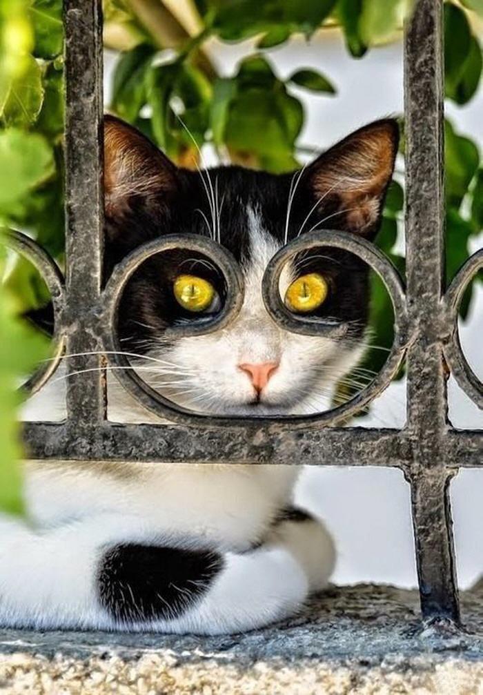 Neighbourhood Cat Always Watching Us
