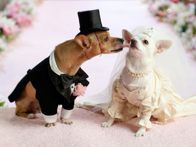 You may now sniff the bride.