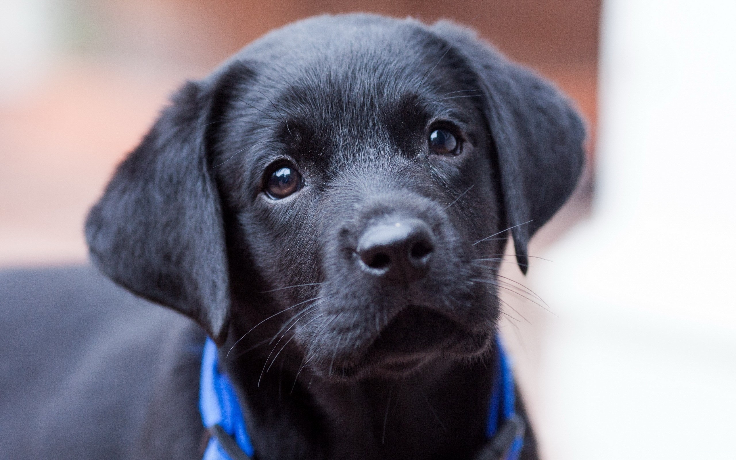 http://7-themes.com/data_images/out/59/6974349-cute-black-puppy.jpg