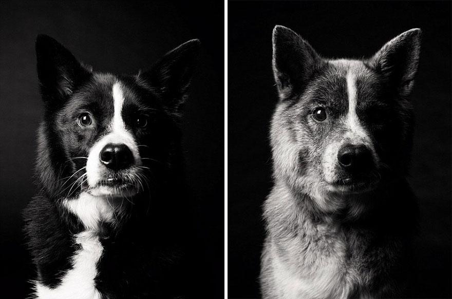 young-dog-old-years-book-amanda-jones-7