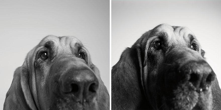 young-dog-old-years-book-amanda-jones-2