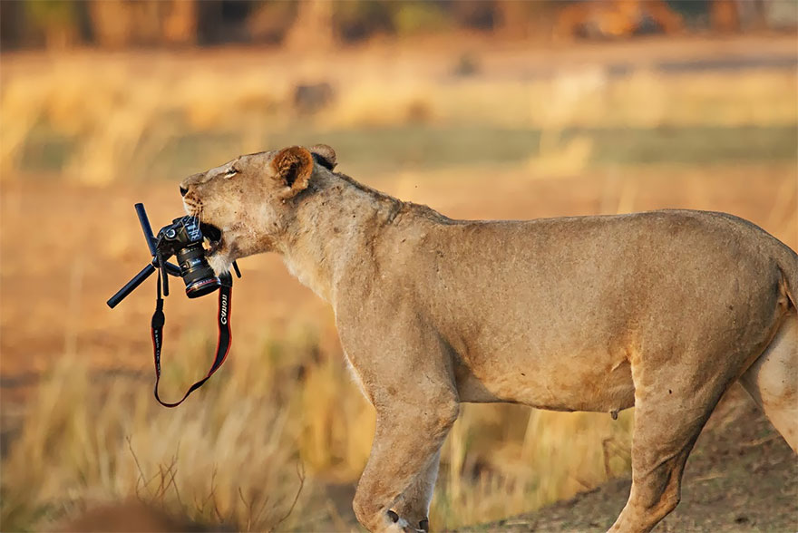 animals-with-camera-helping-photographers-30__880