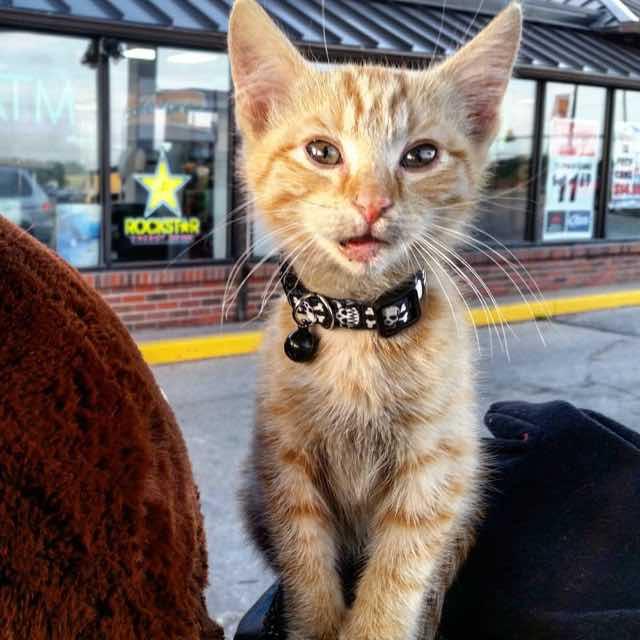 cat-biker-saves-kitten-pat-doody-17