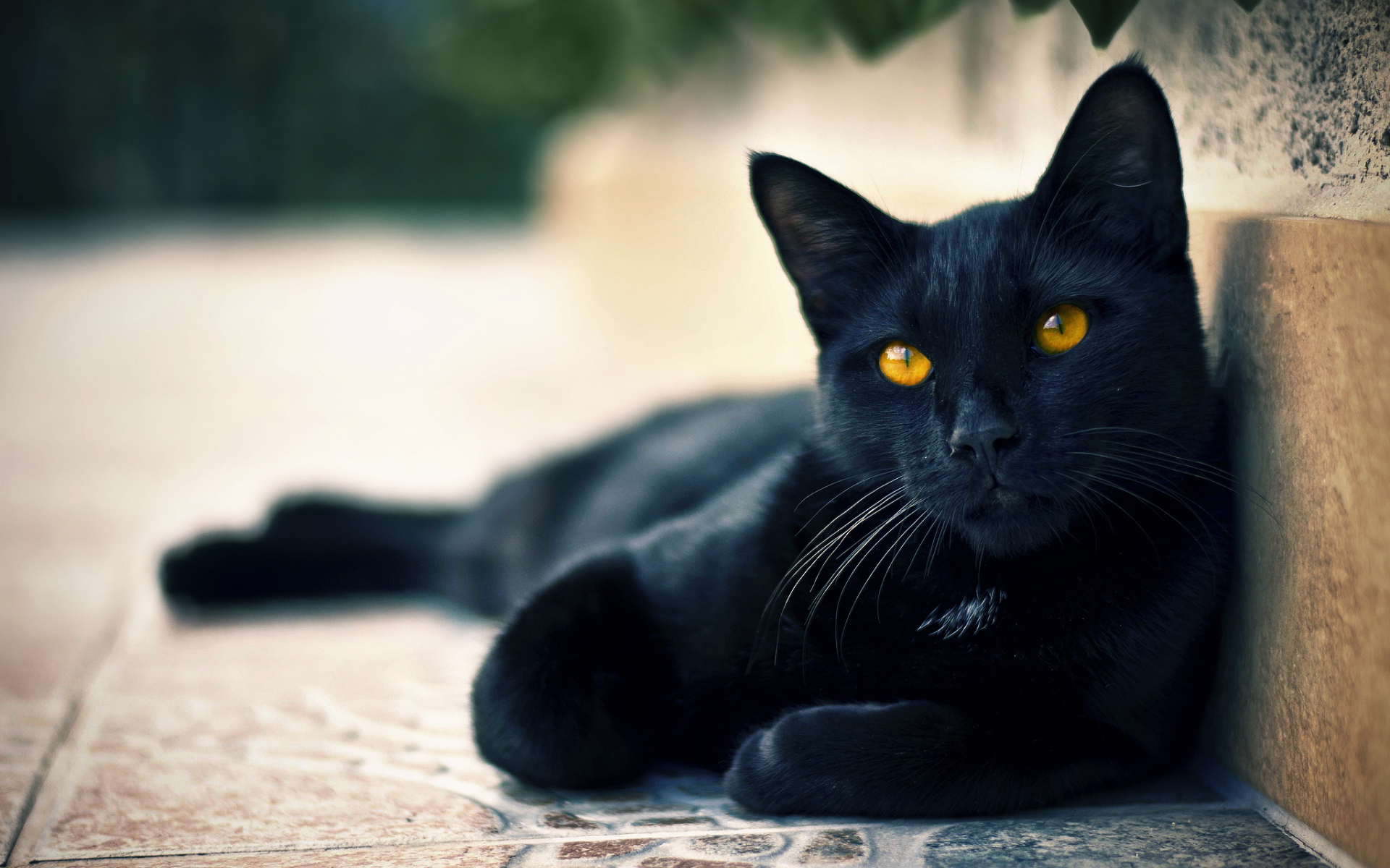 http://www.awesomelycute.com/gallery/2014/11/black-cats-awesomelycute.com-14.jpg