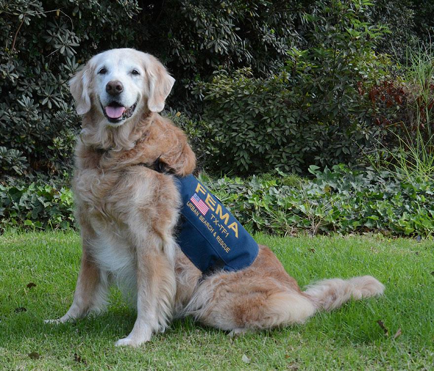 last-9-11-rescue-dog-birthday-party-new-york-bretagne-denise-corliss-1