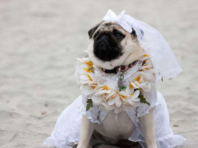 It was such a blessing to have my paw-ther walk me down the aisle.