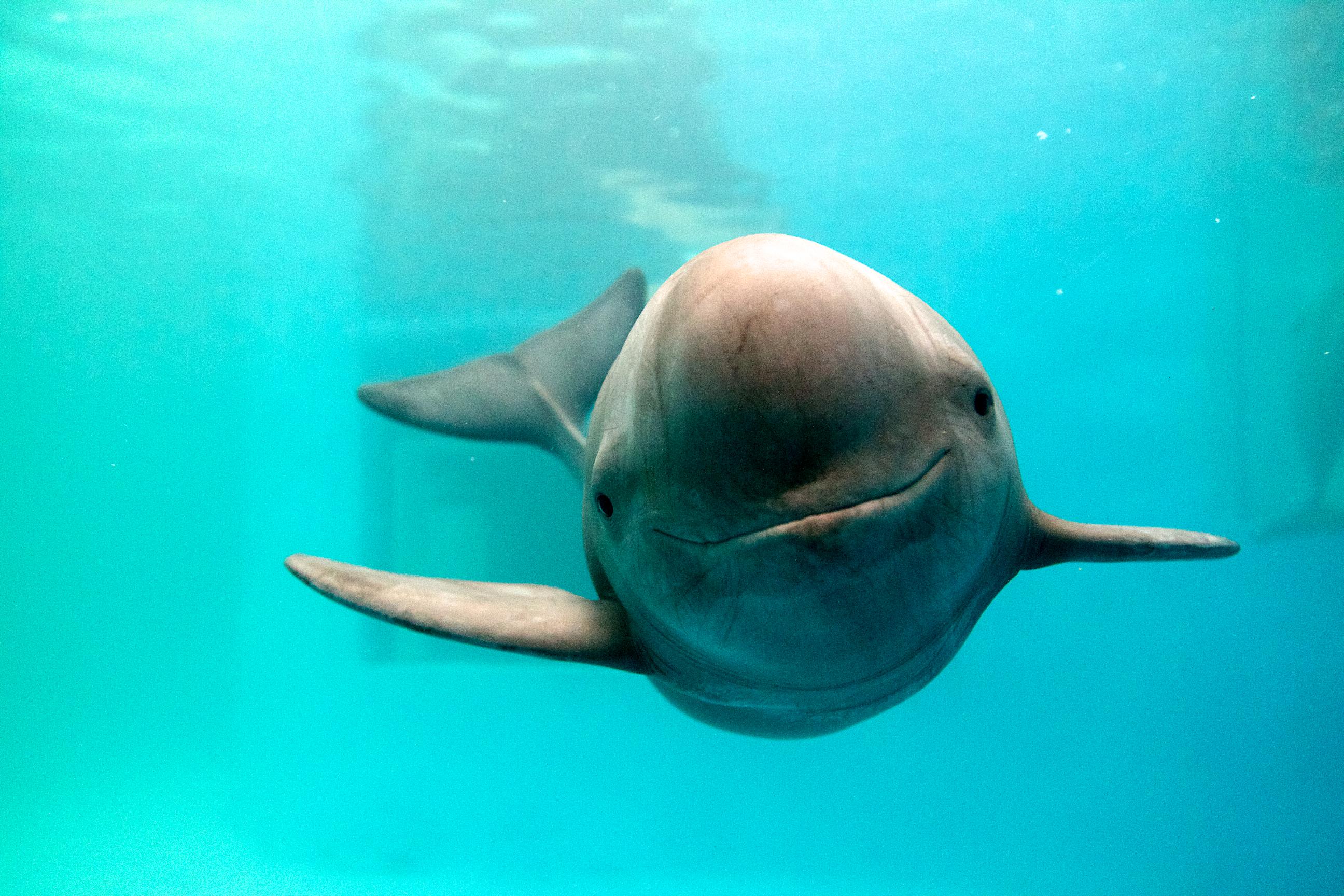 http://newshour-tc.pbs.org/newshour/wp-content/uploads/2015/03/dolphin.jpg