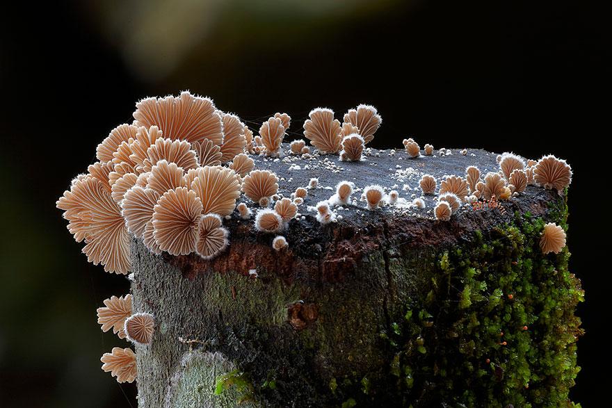 mushroom-photography-steve-axford-111
