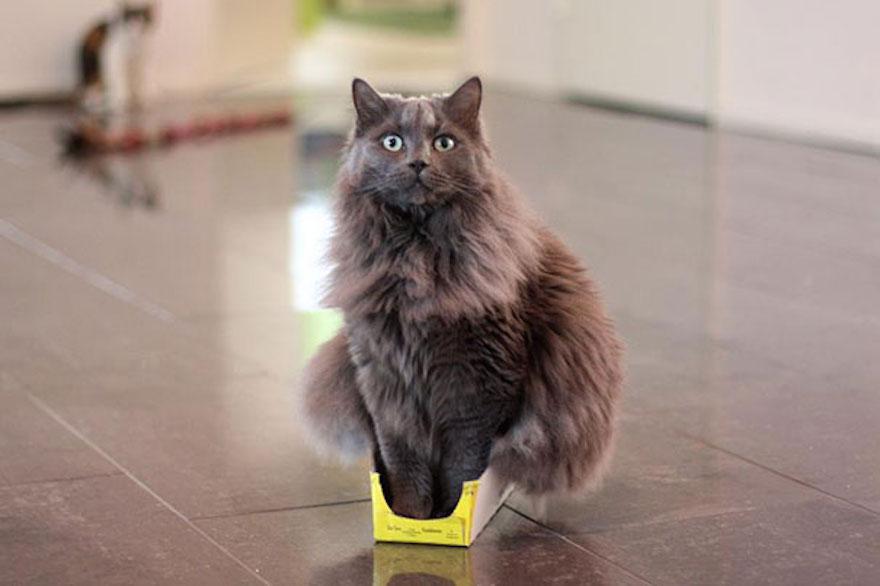 funny-cat-logic-54__605