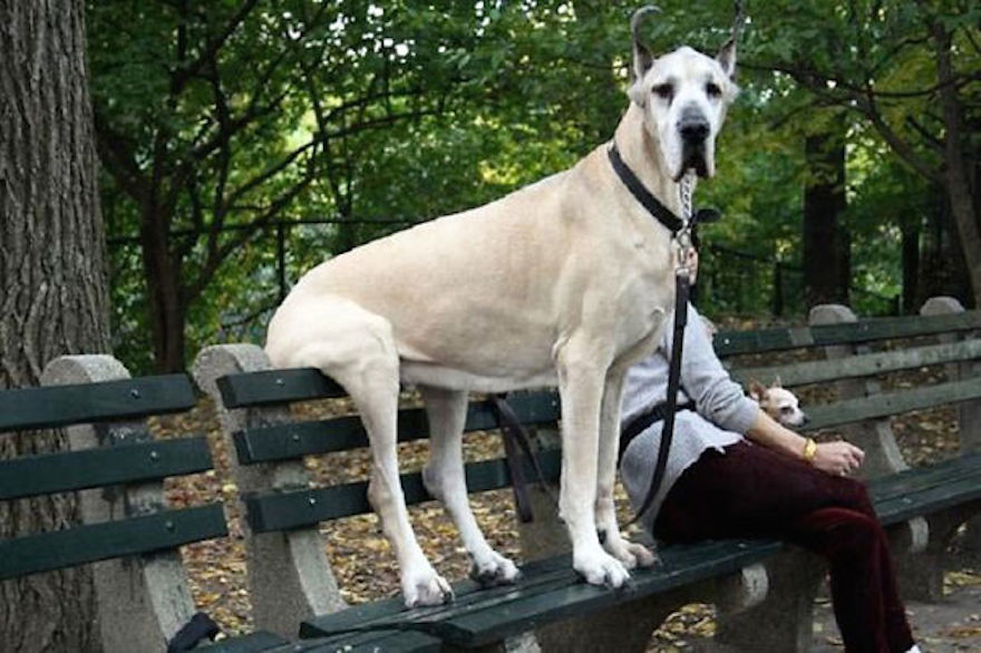 huge-dogs-feel-small-22__605