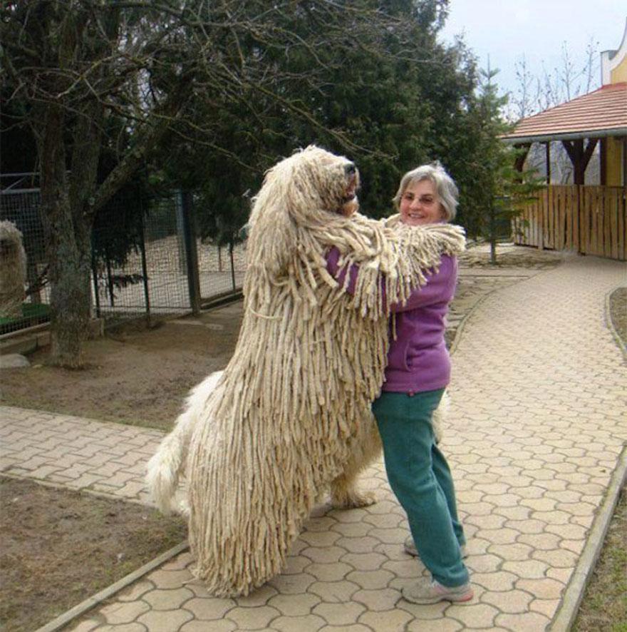huge-dogs-feel-small-dancing1