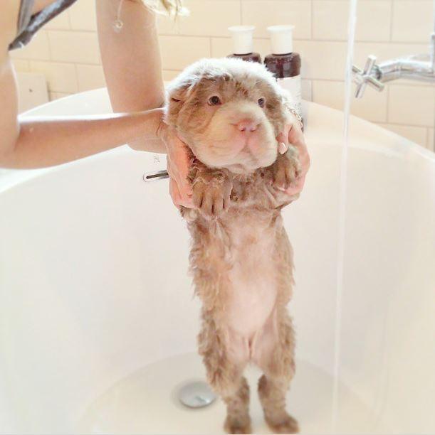 tonkey bath