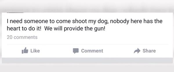 facebook-dog-1
