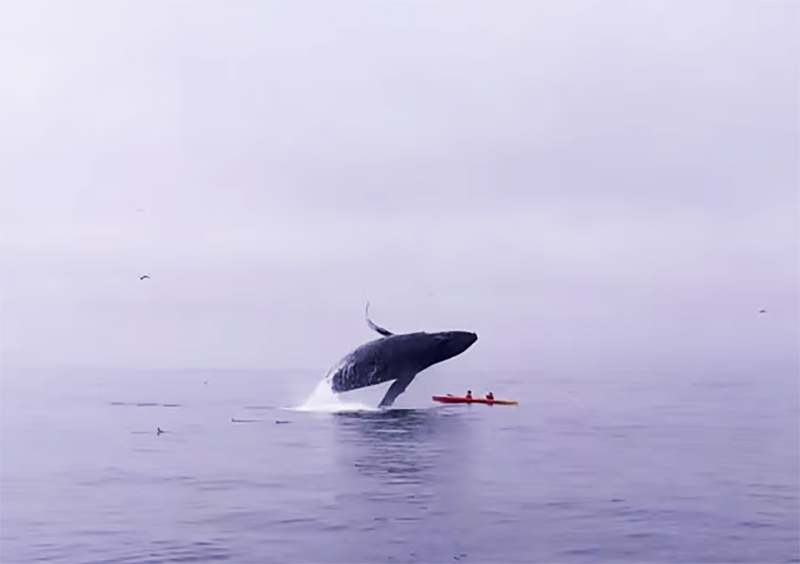 whale kayakers