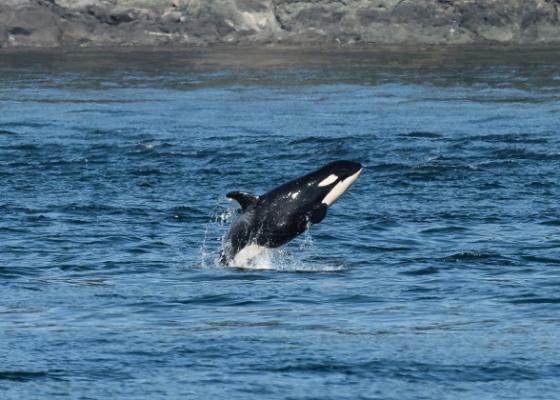 orca-preschool9