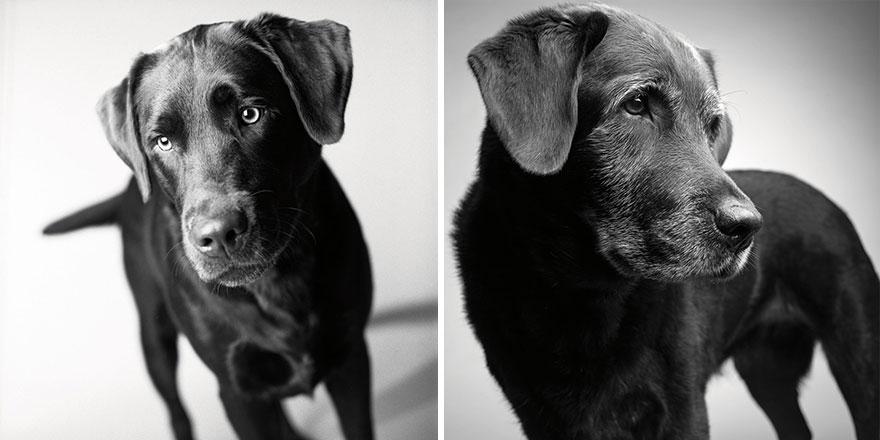 young-dog-old-years-book-amanda-jones-3